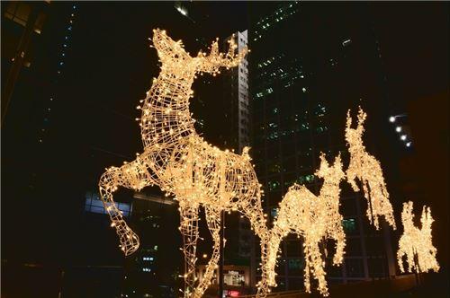 Majestic reindeer!